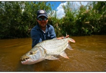 Monster Tigerfish on the Fly