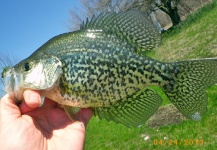 Fly-fishing Picture of Crappie shared by David Merical – Fly dreamers