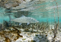 Diego Gimenes 's Fly-fishing Pic of a Bonefish – Fly dreamers