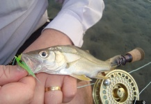Fly-fishing Image of Snook - Robalo shared by Diego Gimenes – Fly dreamers