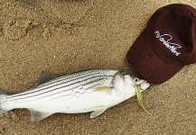 Jack Denny 's Fly-fishing Image of a Striper – Fly dreamers