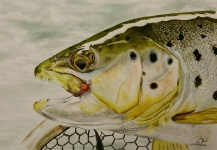 Jason Bordash's Nice Fly-fishing Art Pic – Fly dreamers