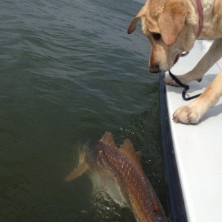 Charley the redfish hunter and a 32lber.