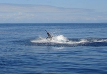 Fly-fishing Situation of Marlin shared by John Kelly