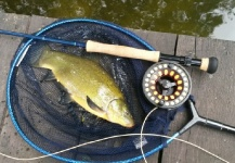 Jan Wagner 's Fly-fishing Pic of a Tench – Fly dreamers
