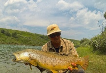 Fly-fishing Photo of Brown trout shared by Patrick Pendergast – Fly dreamers
