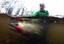 Dave McCoy 's Fly-fishing Image of a Silver salmon – Fly dreamers