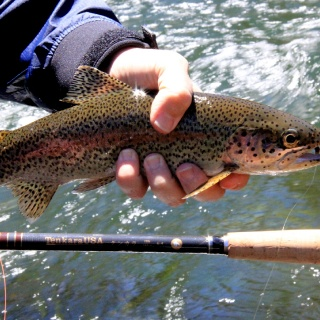 Another with tenkara