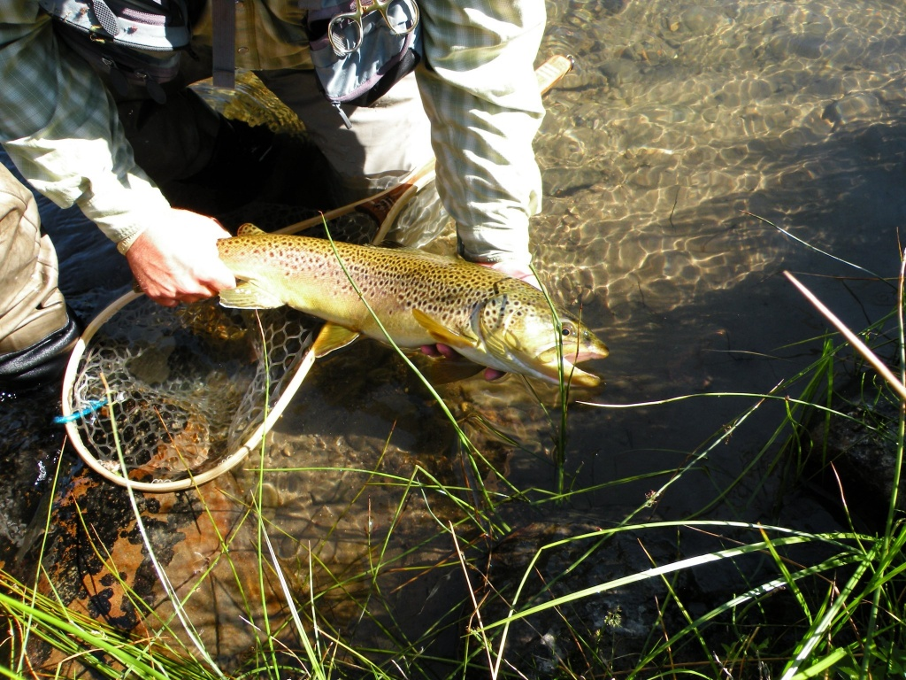 Tahoe fly fishing outfitters fly fishing agent fly for Tahoe fly fishing