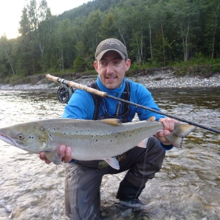 Gaula Atlantic salmon - Norway