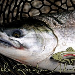 Coho salmon, in chrome!