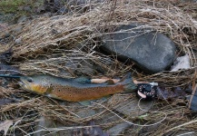 Rusty Lofgren 's Fly-fishing Catch of a Brown trout – Fly dreamers
