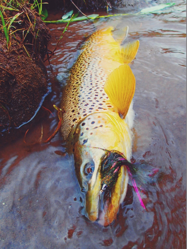 Duranglers flies and supplies fly fishing guide fly for Fly fishing flies chart