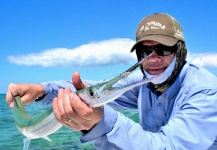 D.R. Brown 's Fly-fishing Picture of a Needlefish – Fly dreamers