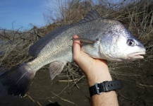 Great Fly-fishing Situation of Freshwater Drum shared by Ben Stahlschmidt
