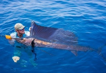 Fergus Kelley 's Fly-fishing Picture of a Sailfish – Fly dreamers