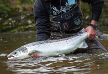 Black Fly Eyes Flyfishing 's Fly-fishing Pic of a Silver salmon – Fly dreamers