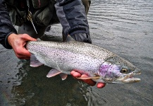 Fly-fishing Pic of Rainbow trout shared by Luke Metherell – Fly dreamers