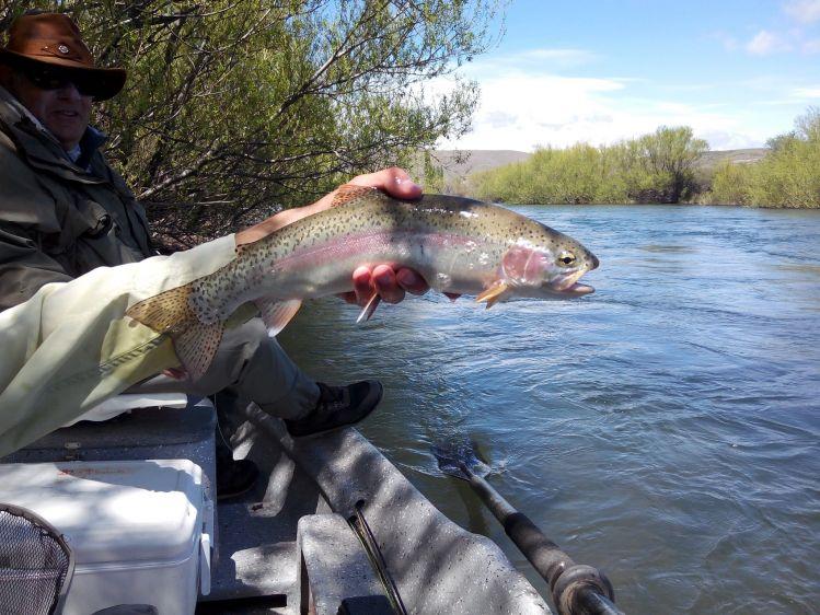 Fishing Report: Rio Chimehuin by Alejandro Ballve