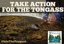 Take Action for The Tongass