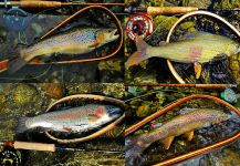 Musicarenje.net  Cicko Murino 's Sweet Fly-fishing Pic – Fly dreamers