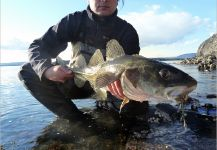 Fly-fishing Picture of Cod shared by Fly Fishing Fanatics – Fly dreamers
