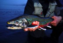 Fly-fishing Pic of Dolly Varden shared by Luke Metherell – Fly dreamers