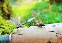Interesting Fly-fishing Entomology Image shared by BERNET Valentin – Fly dreamers