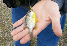 Tyler Pouw 's Fly-fishing Photo of a Sunfish – Fly dreamers