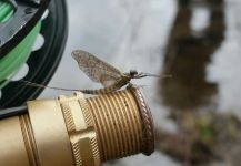 Stephane Geraud 's Fly-fishing Entomology Photo – Fly dreamers