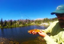 Justin Taylor 's Fly-fishing Catch of a goldens – Fly dreamers