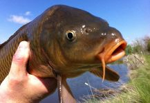 Brian Shepherd 's Fly-fishing Catch of a bighead carp | Fly dreamers