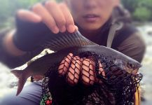 海洋 银 's Fly-fishing Picture of a Arctic grayling | Fly dreamers