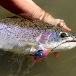 Spey fishing for Cattaraugus Creek New York steelhead