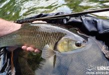 Fly-fishing Photo of Chub shared by Uros Kristan | Fly dreamers