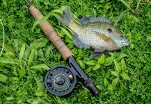 Fly-fishing Pic of bluegill shared by Rusty Lofgren | Fly dreamers