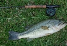 Fly-fishing Picture of bigmouth bass shared by Rusty Lofgren | Fly dreamers