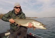 Fly-fishing Photo of Muskie shared by Ryan Shea | Fly dreamers