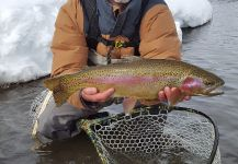 Fly-fishing Situation of Rainbow trout - Photo shared by Darin Day | Fly dreamers