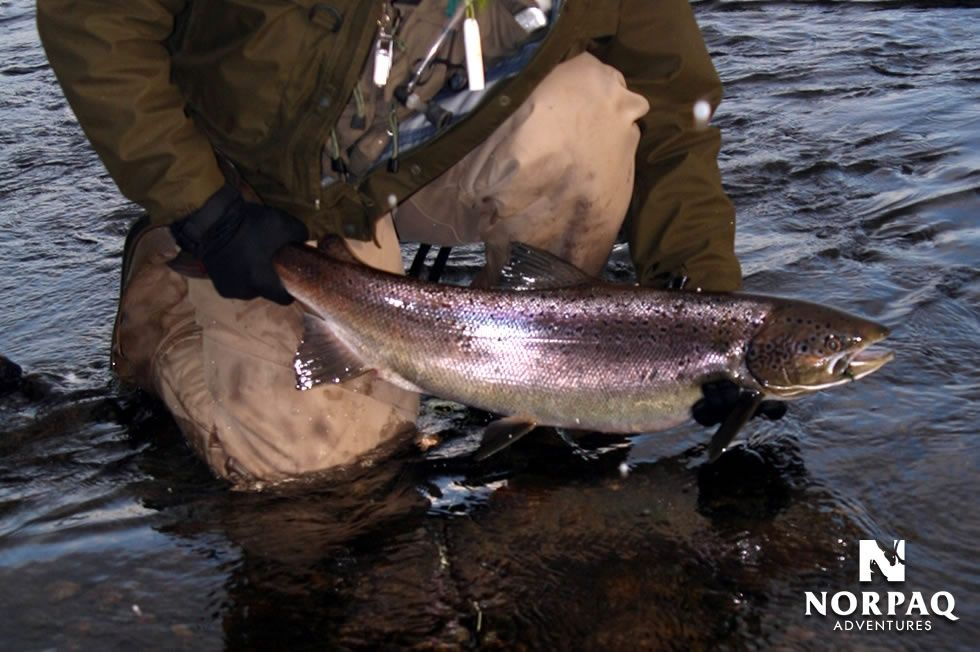 Norpaq adventures fly fishing lodge fly dreamers directory for Fishing in quebec