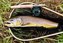 Rusty Lofgren 's Fly-fishing Photo of a European brown trout | Fly dreamers