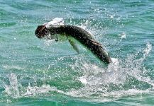Chris Eckley 's Fly-fishing Photo of a Tarpon | Fly dreamers