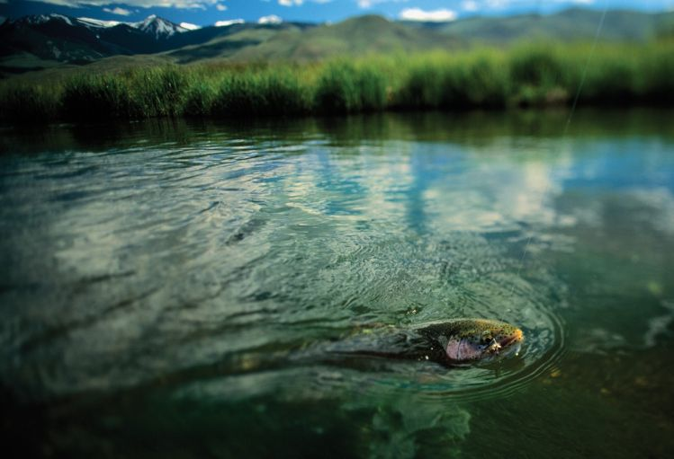 Fishing report salmon river by silver creek outfitters for Salmon fishing in idaho