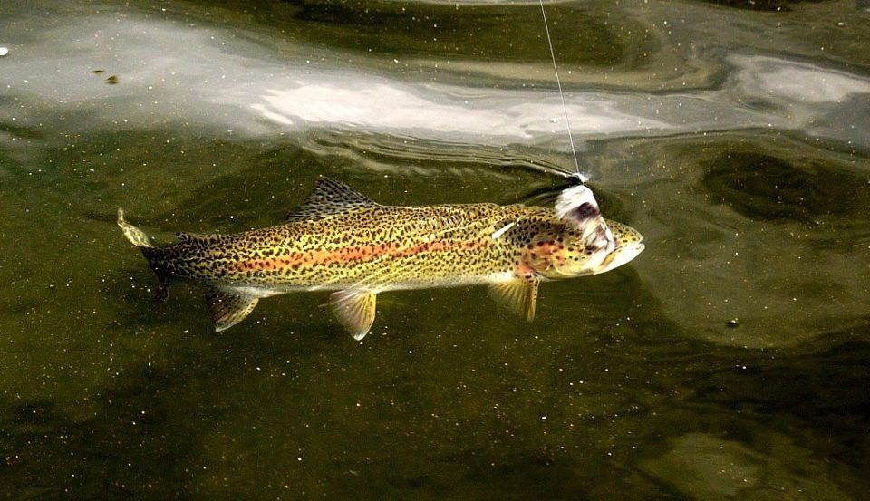 Alaska fishing and raft adventures fly fishing guide for Fly fishing raft