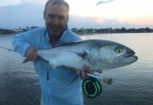 David Bullard 's Fly-fishing Picture of a Bluefish - Tailor - Shad | Fly dreamers