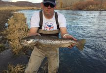 Fly-fishing Image of German brown shared by D.R. Brown | Fly dreamers