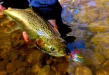Lake Erie and Lake Ontario Tributaries with Fish Lake Run Outfitters