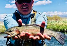 Fly-fishing Image of Rainbow trout shared by Mike Campbell | Fly dreamers