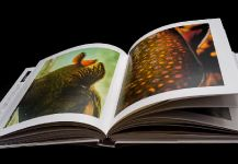 Wild Trout: A Book by Photographer Isaías Miciu and Biologist Javier Urbanski