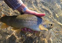 Fly-fishing Picture of Brownie shared by Pato Mac Allister | Fly dreamers